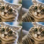 Звуки, которых боятся кошки - слушать онлайн