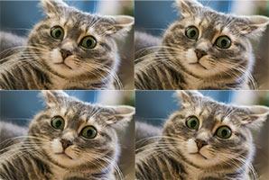 Звуки, которых боятся кошки - слушать онлайн, скачать mp3, ТОП самых страшных звуков
